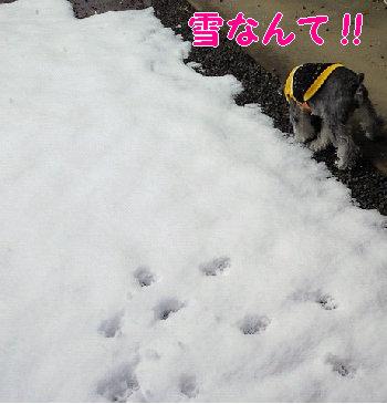 おりばーの雪遊び?.jpg