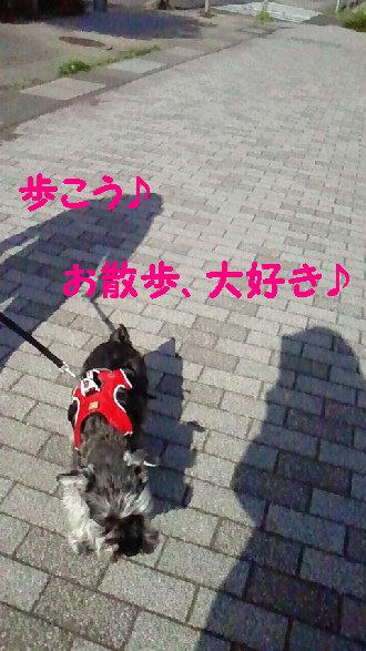 お散歩大好き.jpg