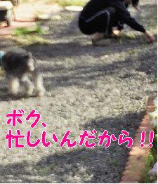 がんばってる〜.jpg