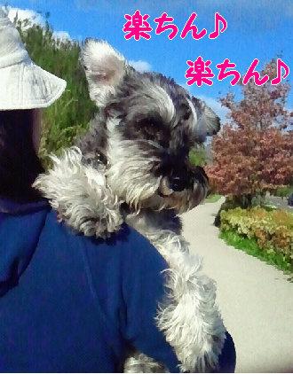 抱っこ散歩で、ご満悦.jpg